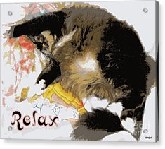 Relax Cat Acrylic Print by Heidi Manly