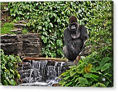 Relaxation Time Acrylic Print by Rachael Milovich