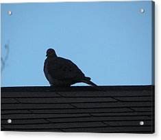Relaxing On The Roof Acrylic Print by Rickey Rivers Jr