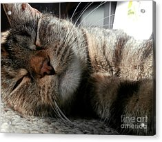 Relaxing Acrylic Print by Steven Valkenberg