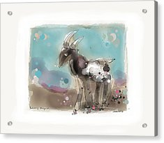Releasing The Goat Acrylic Print by Peter Ciccariello