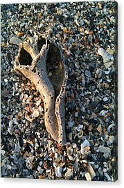Relic Acrylic Print by M West