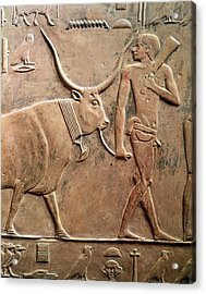 Relief Depicting A Peasant Leading A Cow To Sacrifice, From The Mastab Of Ptah-hotep Acrylic Print by Egyptian 5th Dynasty