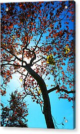 Acrylic Print featuring the photograph Remains Of The Summer by Richard Stephen