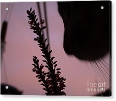 Acrylic Print featuring the photograph Remember Me by Laura  Wong-Rose