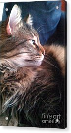 Acrylic Print featuring the photograph Remembering Bo by Jacqueline McReynolds