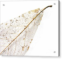 Acrylic Print featuring the photograph Remnant Leaf by Ann Horn