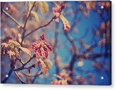 Renewal Acrylic Print by Laurie Search