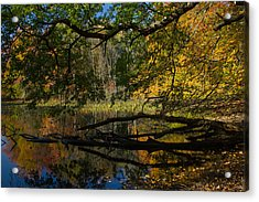 Acrylic Print featuring the photograph Renewal Two by Jose Oquendo