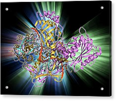 Repair Protein And Dna Acrylic Print by Laguna Design