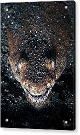 Reptilian Snake Eel Acrylic Print by Ethan Daniels