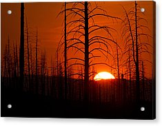 Requiem For A Forest Acrylic Print by Jim Garrison