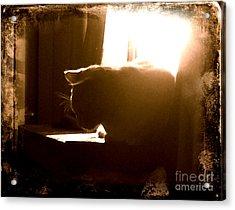 Rescue Cat Acrylic Print