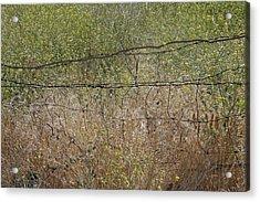 Resonate Acrylic Print by Viktor Savchenko