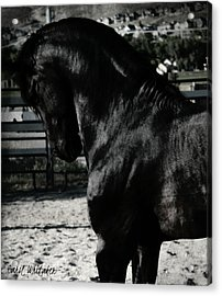 Respectfully Yours Acrylic Print by Royal Grove Fine Art