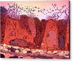 Respiratory Epithelium Acrylic Print