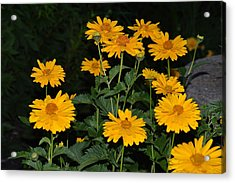Resplendent Yellows Acrylic Print