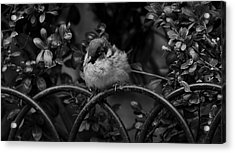 Rest For The Weary Acrylic Print by Paul Watkins