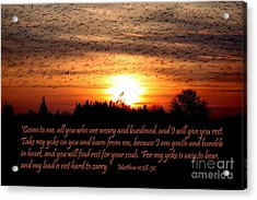 Rest In Him Acrylic Print by Erica Hanel