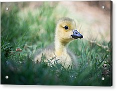 Acrylic Print featuring the photograph Rest by Priya Ghose