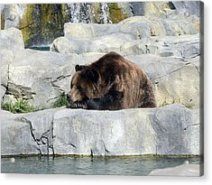 Acrylic Print featuring the photograph Resting Bear by Teresa Schomig
