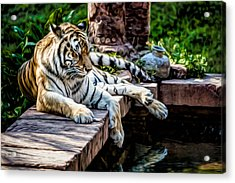 Acrylic Print featuring the photograph Resting Beauty by Joshua Minso
