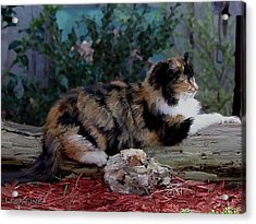 Resting Calico Cat Acrylic Print by Lesa Fine