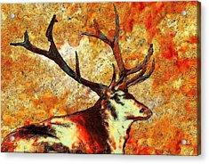 Resting Elk Acrylic Print by Jack Zulli