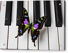 Resting On The Piano Acrylic Print by Garry Gay