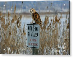 Resting Owl Acrylic Print by Marty Fancy