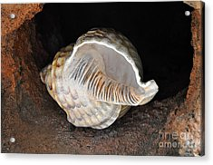 Acrylic Print featuring the photograph Resting Place by Gina Savage