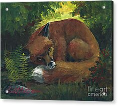 Resting Red Fox Acrylic Print