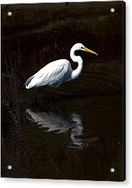 Resting Reflection Acrylic Print by Paula Porterfield-Izzo