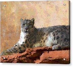Resting Snow Leopard Acrylic Print by Roger D Hale