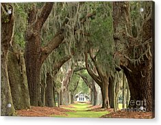 Retreat Avenue Of The Oaks Acrylic Print by Adam Jewell