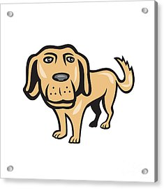 Retriever Dog Big Head Isolated Cartoon Acrylic Print by Aloysius Patrimonio