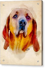 Retriever Acrylic Print