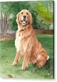 Retriever Watercolor Portrait Acrylic Print by Mike Theuer