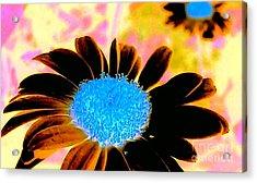 Retro Daisy Acrylic Print