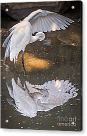 Revealed Close-up Acrylic Print by Kate Brown