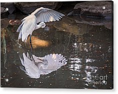 Revealed Landscape Acrylic Print by Kate Brown