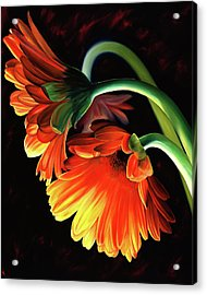 Reverence Acrylic Print by Stephen Kenneth Hackley