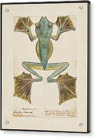 Rhacophorus Tree Frog Acrylic Print by Natural History Museum, London