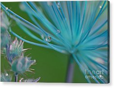 Rhapsody In Blue Acrylic Print