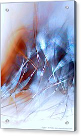 Rhapsody Of Art Acrylic Print by JCYoung MacroXscape
