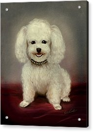 Cutest Poodle Acrylic Print by Evie Cook