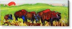 Rhino Buffalo Acrylic Print