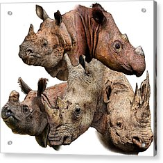 Rhino Collage Acrylic Print