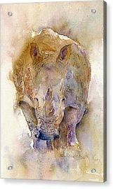 Rhino Acrylic Print by Cynthia Roudebush