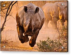 Rhino Learning To Fly Acrylic Print by Justus Vermaak